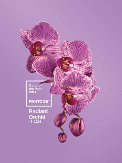 PANTONE-Color-of-the-Year-2014-18-3224-Radiant-Orchid-w-Logo-v1